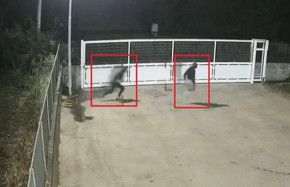 """PASTORANO (CE): furto sventato presso """"AZIENDA AGRICOLA DOMENICO LICCARDO"""""""